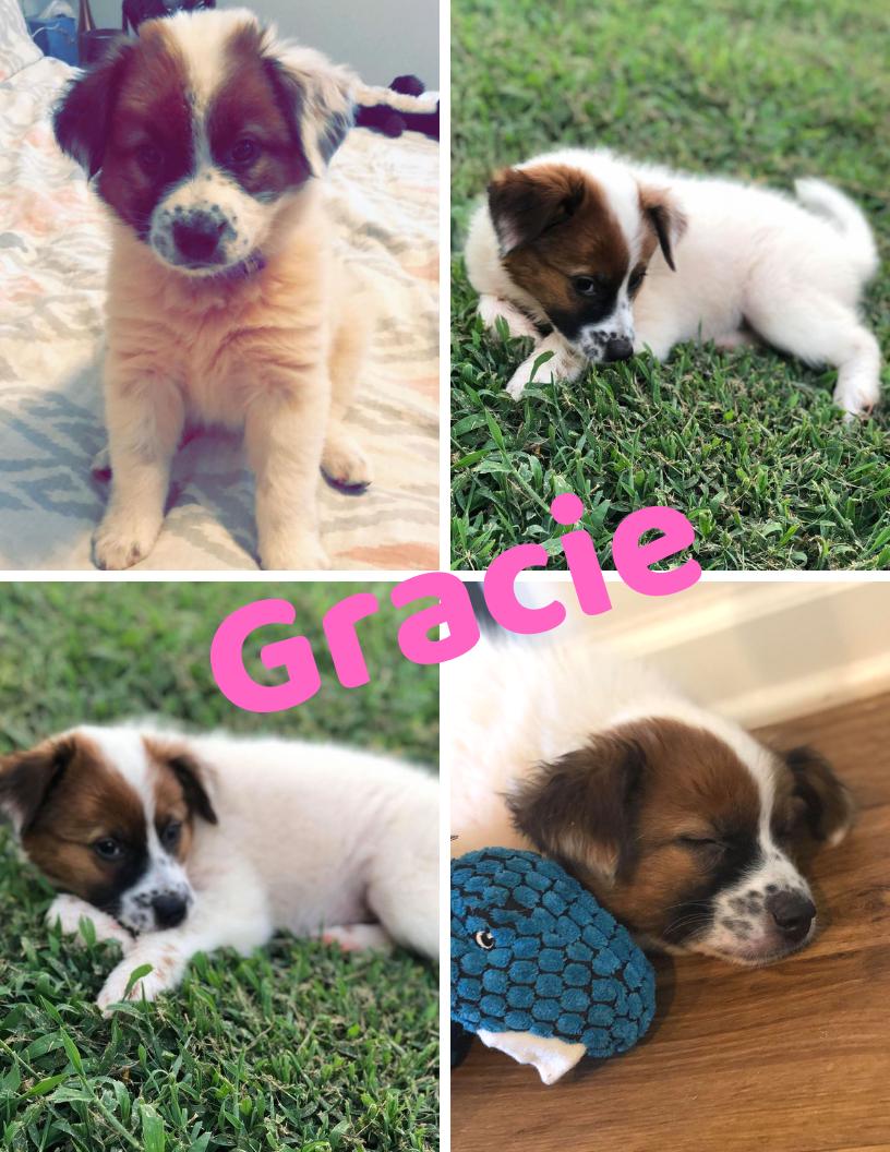Gracie - 8/10/19