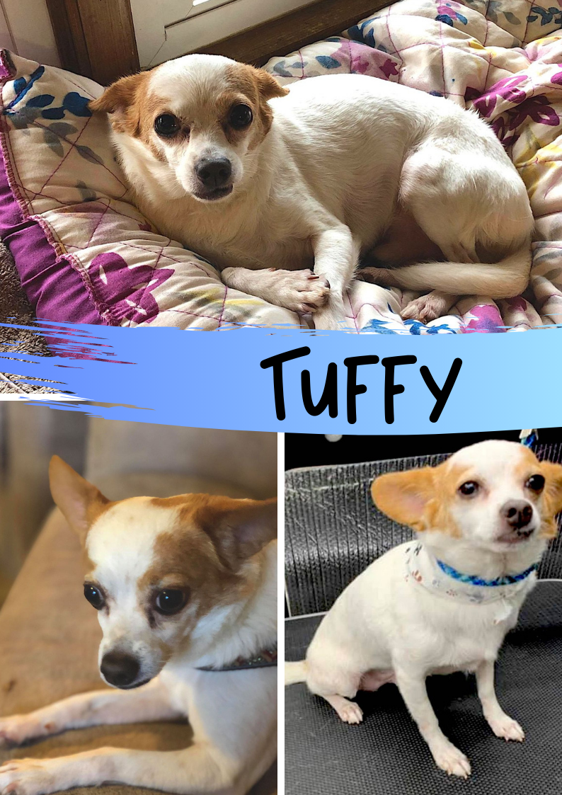 Tuffy - 1/13/20