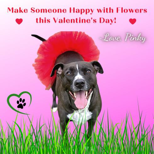 Pinky tutu Valentine 13.png