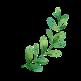 Leaves transparent 1.png