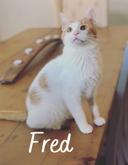 Fred - 11/1/20