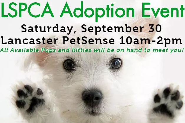 Adoption Event Advertising