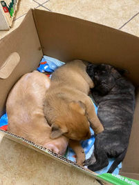 Give away pups 2:27:20.jpg