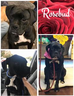 Rosebud - 3/16/20