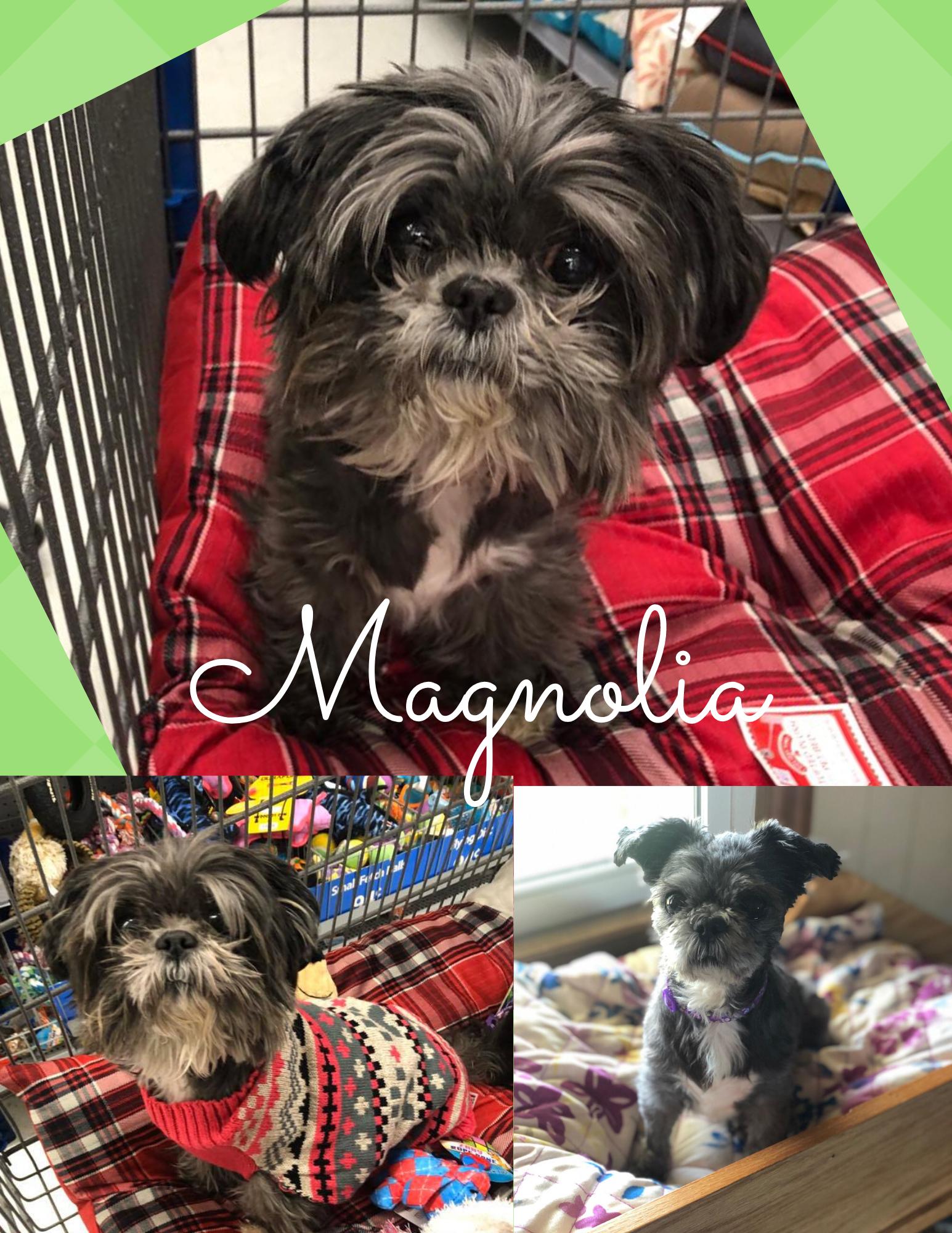 Magnolia - 1/13/20