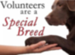 Volunteers are a special breed!
