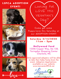 Valentine's Day Adoption Event 2020.png