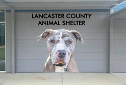 Shelter outside mural by Rapid Signs of Lancaster