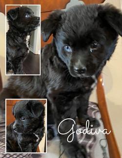 Godiva - 3/8/20
