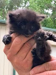 kitten 2 050421.jpg
