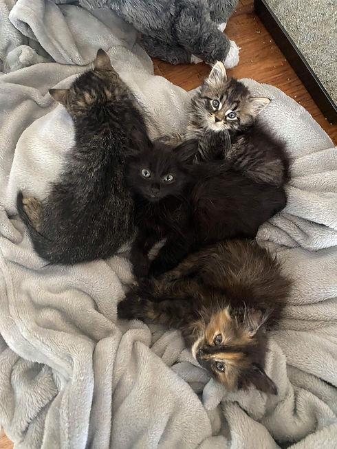 Kittens 092021.JPG