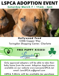 St Patricks Adoption Event 2020.png