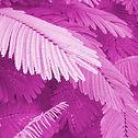 GZ-foglie-Q-mag-s.jpg