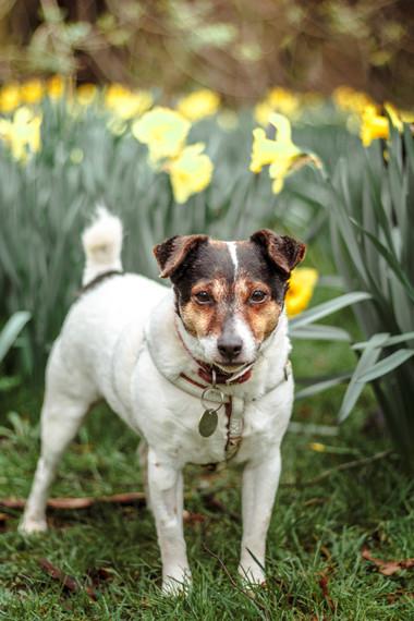Dog Portrait Session