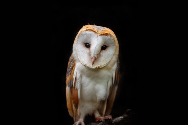 Owl-Long.png