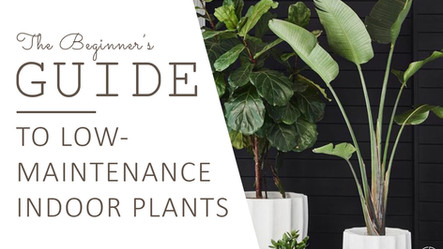 The Beginner's Guide to Low-Maintenance Indoor Plants