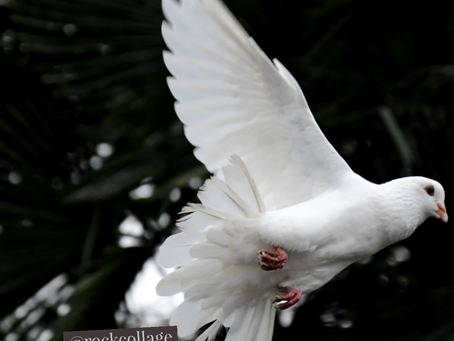 Dove Symbolism