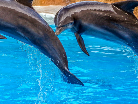 Meaning of Dolphin