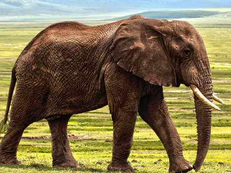 Meaning of the Elephant