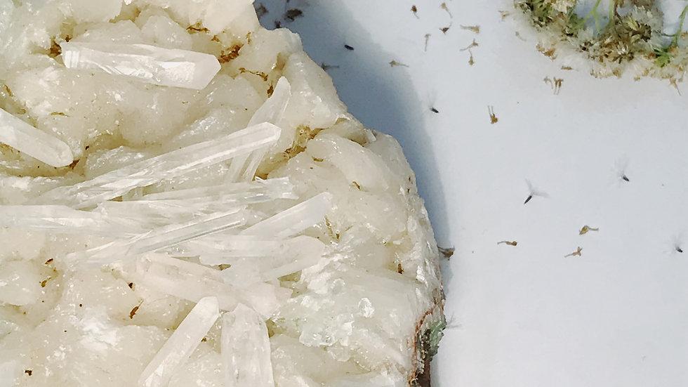 Lemurian Seed Quartz Crystal