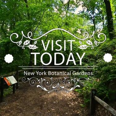 NY Tourism
