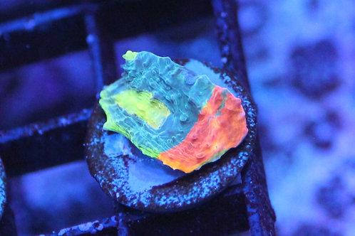 rainbow crush