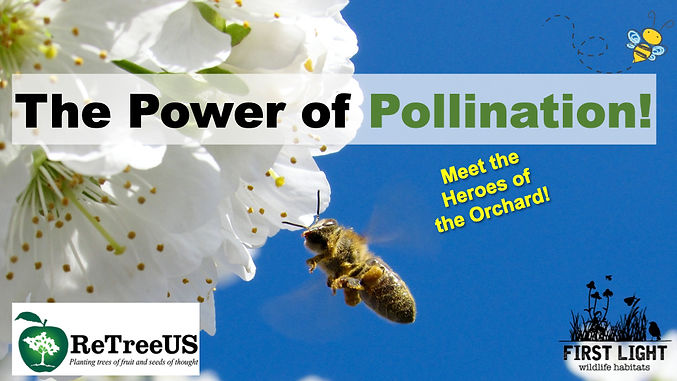 The Power of Pollination  Orchard Curric