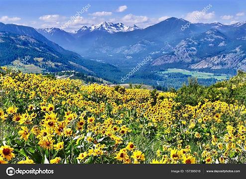 depositphotos_157395016-stock-photo-arnica-in-alpine-meadows.jpg