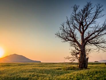 backlit-countryside-dawn-599708.jpg
