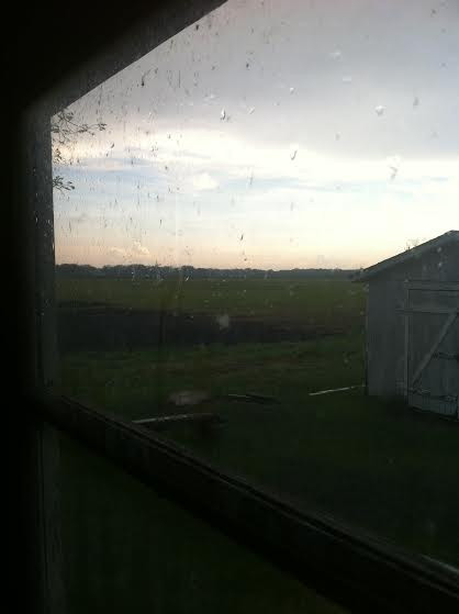 the rain ceases, viewed from the seeding room
