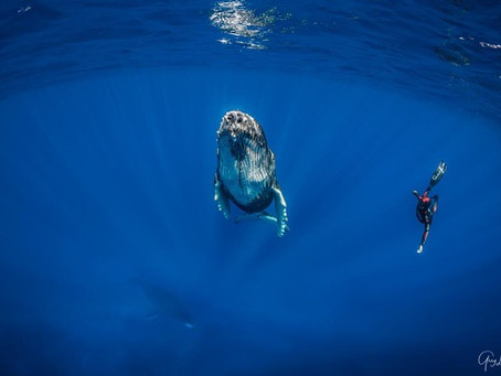 START Aime - Pierre Frolla: De la terre ferme au cœur de l'océan.