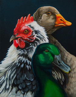The Weidner Flock