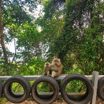 Ahvid ootavad džungli tee ääres kohalikelt banaani