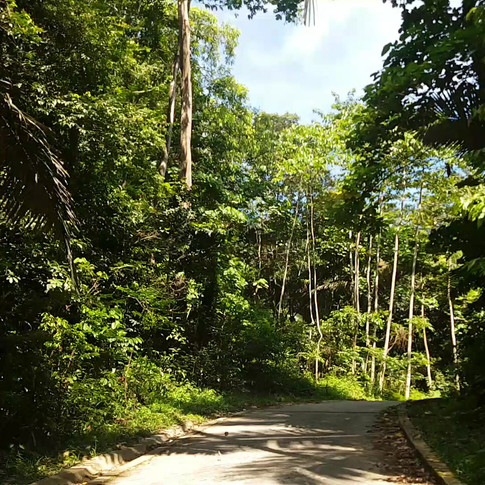 Sõit läbi džungli Juara randa