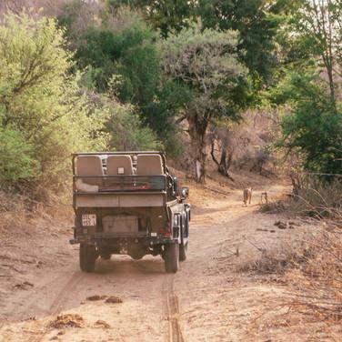Safarit jagasime me ühe teise autoga