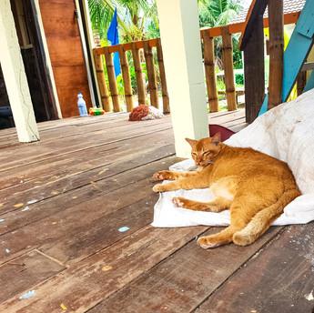 Tioman on tõeline kassiarmastajate paradiis