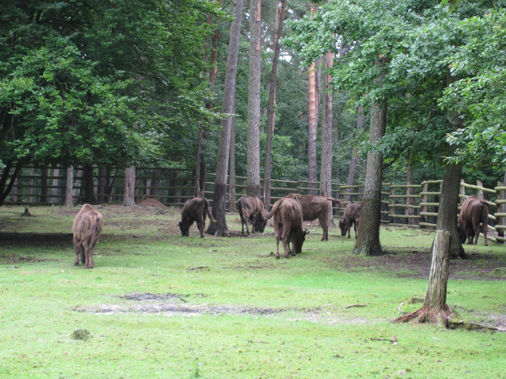 Wolin Nationalpark