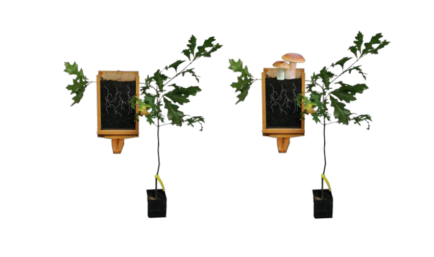 Truffle Trees with a Twist