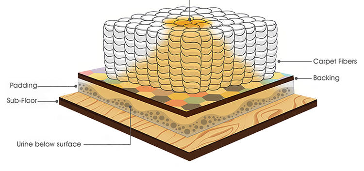pet-stain-padding-cross-section-750.png