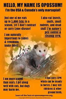Opossum Awareness & Advocacy Information Poster