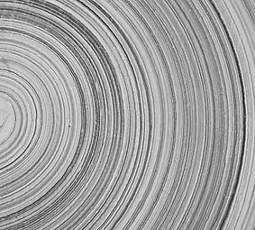 Biofield Tuning Tree Rings