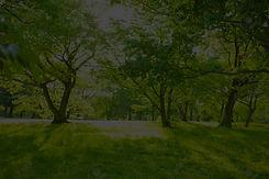 135361988-sunshine-park_edited.jpg
