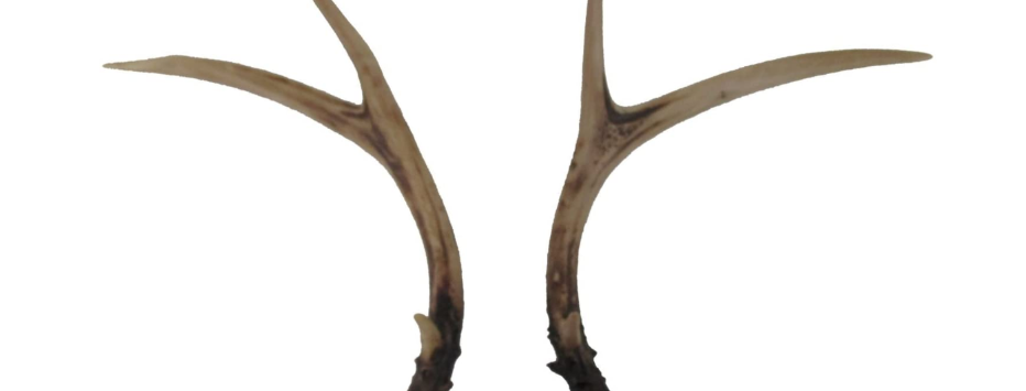 Faux Deer Antlers, Set of 2