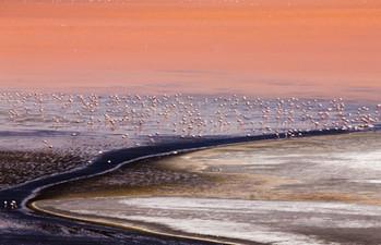 Lagoa Colorada, Deserto da Bolívia, 2014.