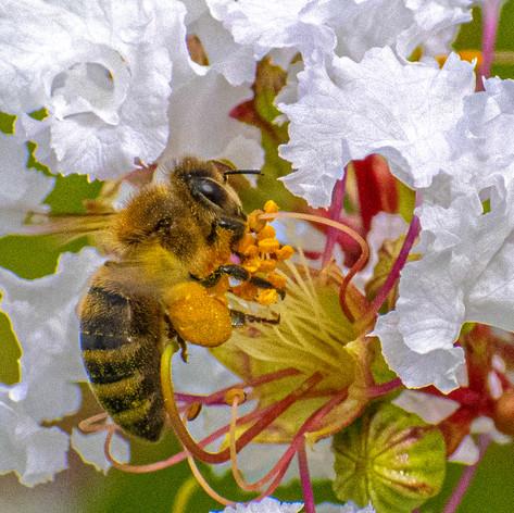 Bees-Picnic_106-2A-WEB.jpg