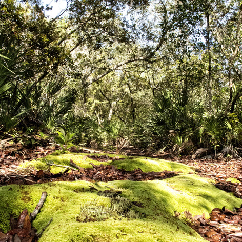Woods2-_41A.jpg