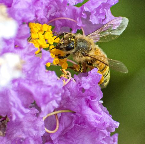 Bees-Picnic_21-2A-WEB.jpg