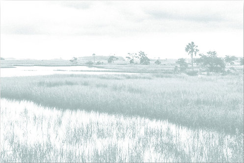 Sage Marsh