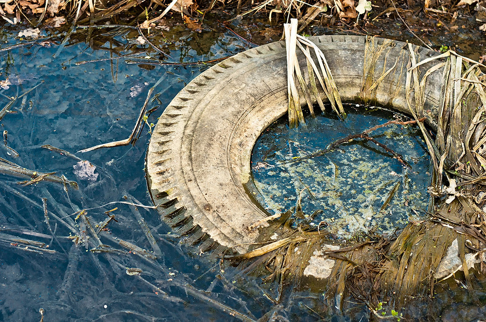 Old tire in ditch water