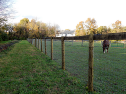 horse fence colorized
